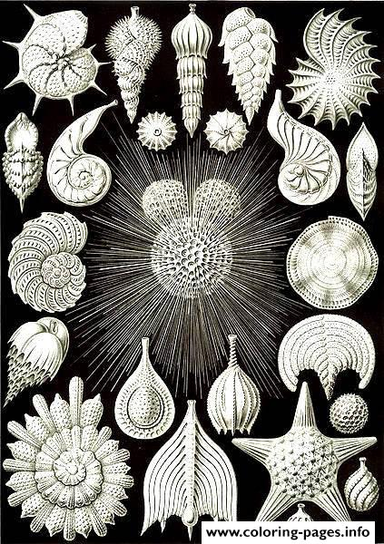 Adult Coquillages Ernst Haeckel Coloring Pages Printable