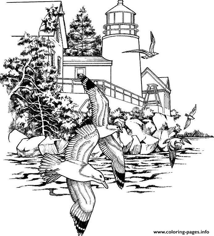 Adult Seagulls coloring pages