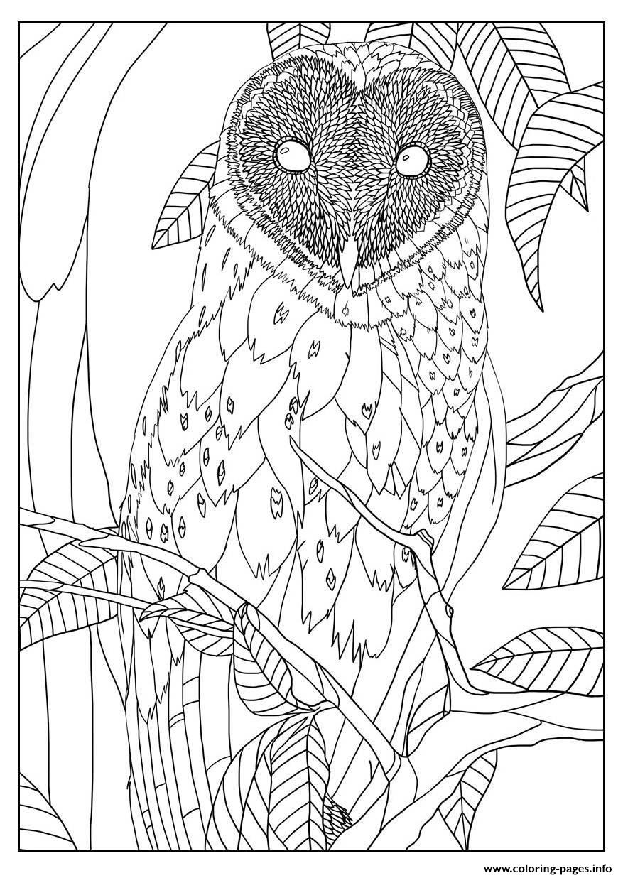 Adult Barn Owl By Mizu coloring pages