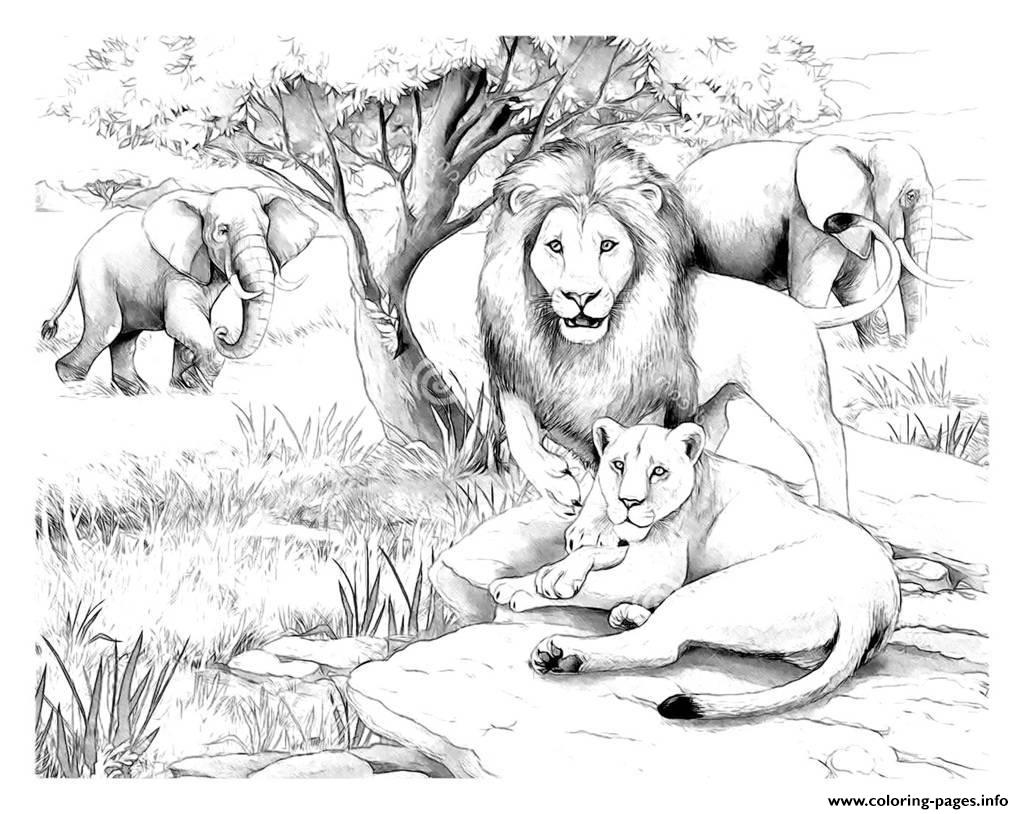 Adult Africa Lions Coloring Pages