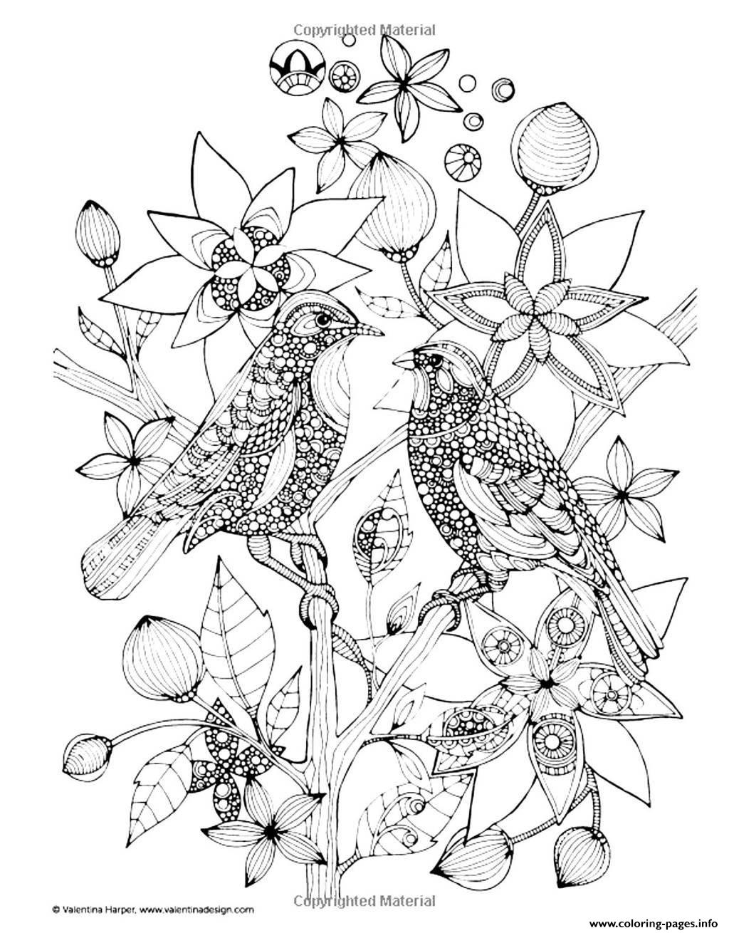 two birds coloring pages printable