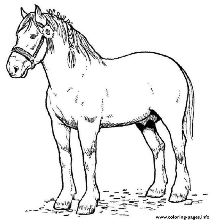 English Horse Sdc4f Coloring Pages Printable