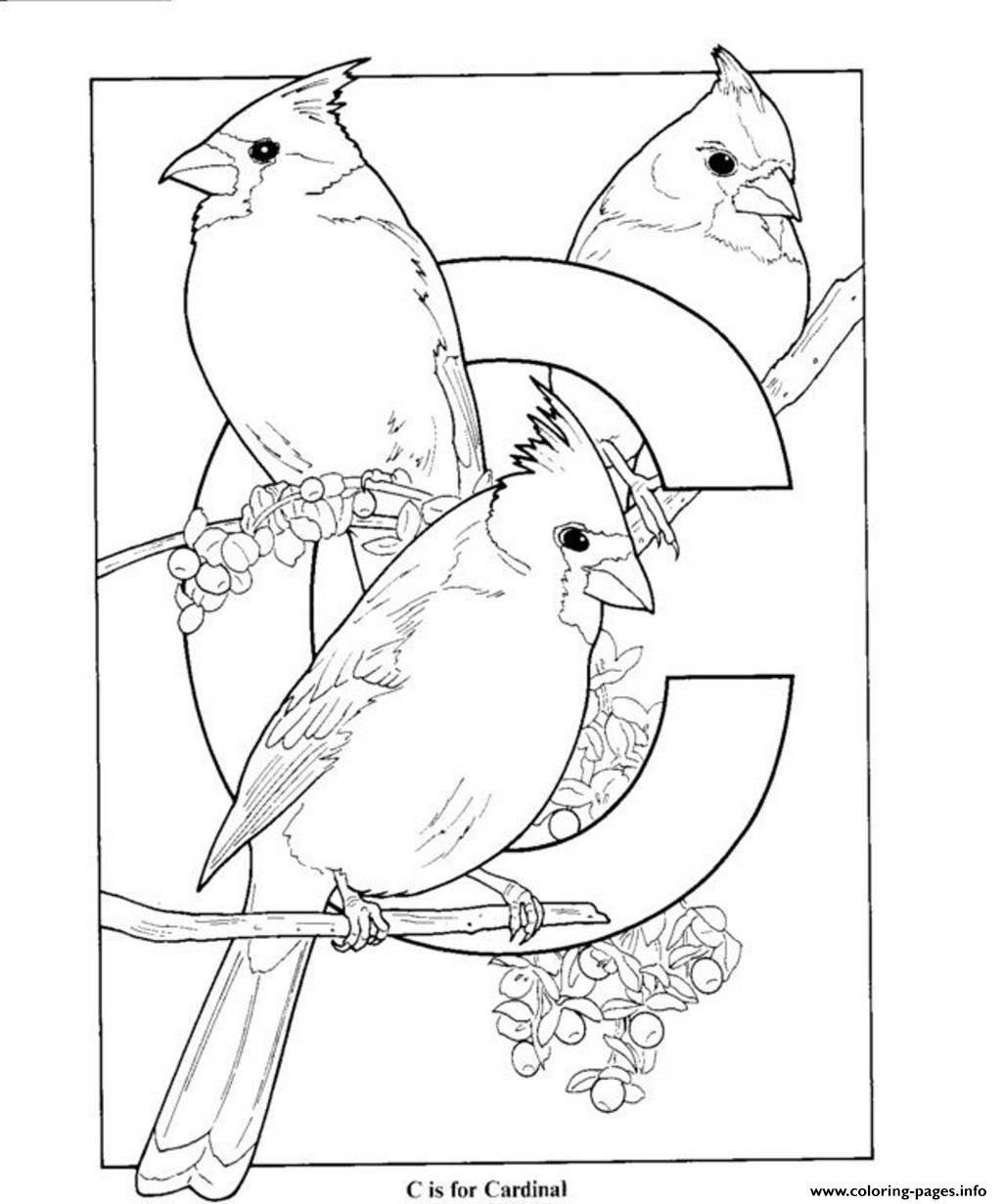 Free S Alphabet C Is For Cardinal Birds11aa Coloring Pages Printable