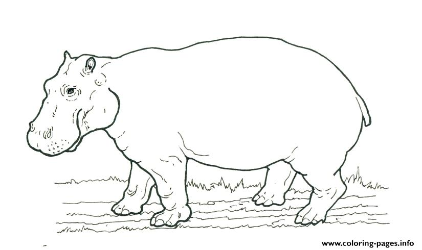 African Animal S Hippo Printablec214 Coloring Pages Printablerhcoloringpagesinfo: African Animals Coloring Pages Printable At Baymontmadison.com