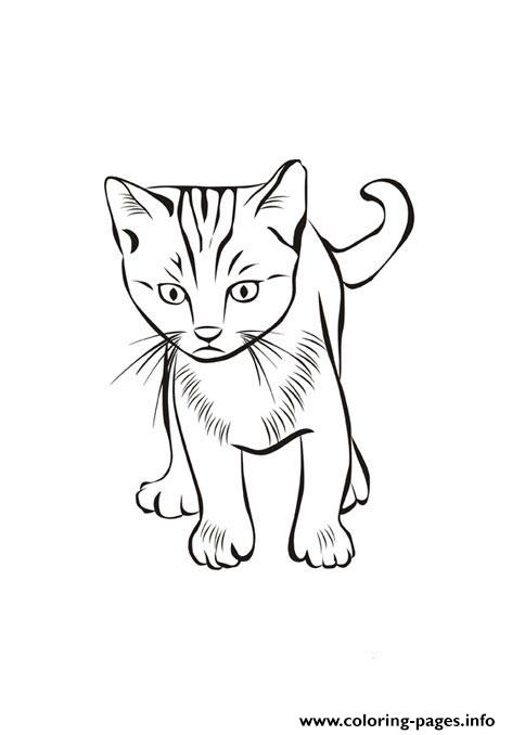 Cat Free Animal Sfb58 Coloring Pages Printable