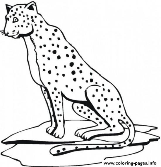 Cheetah Print Out S Animal19de Coloring Pages Printable