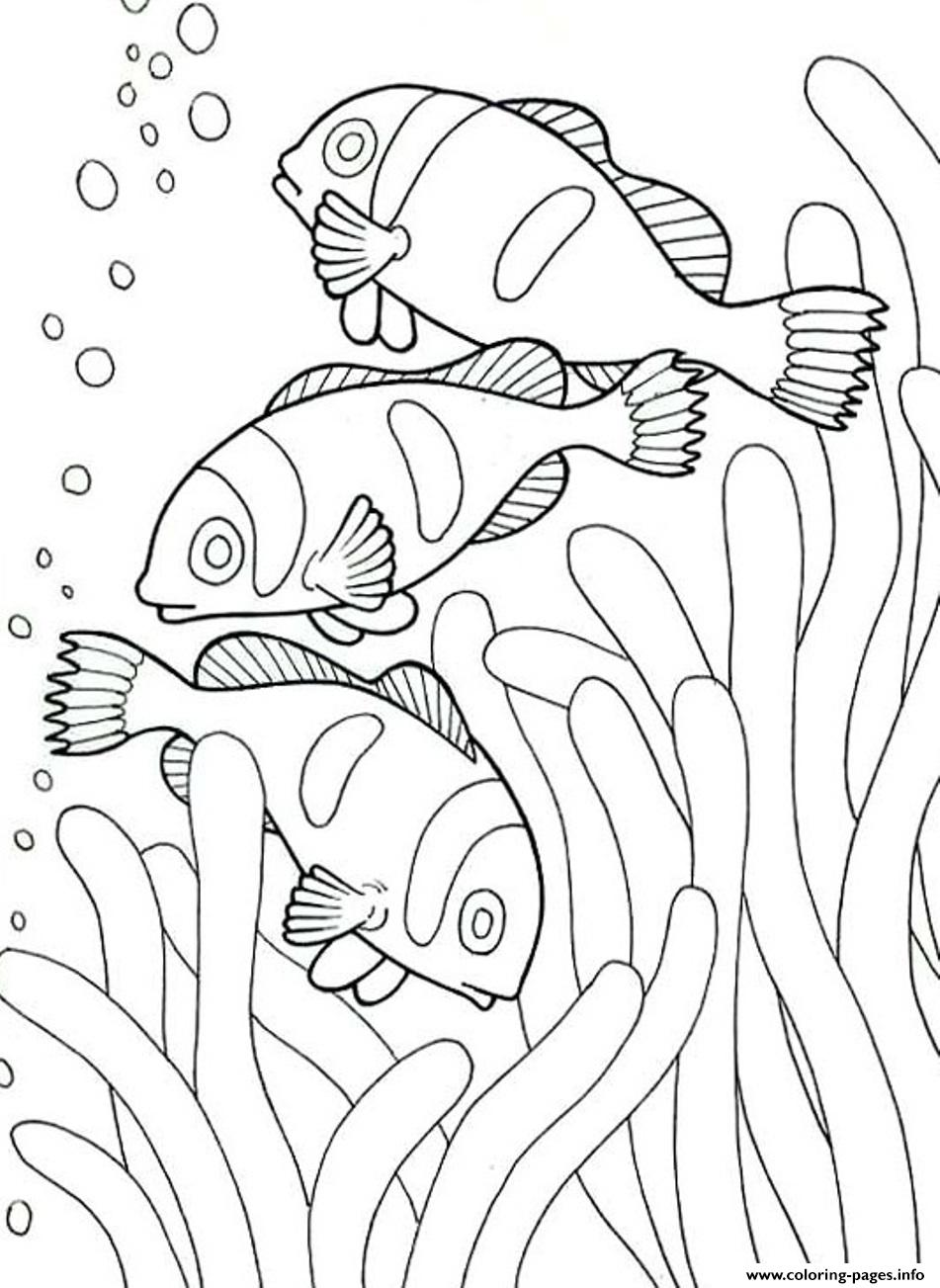 Coloring Pages Of Sea Animals Clown Fish53dd