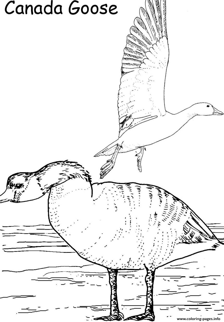 canada goose printable animal s648f coloring pages printable