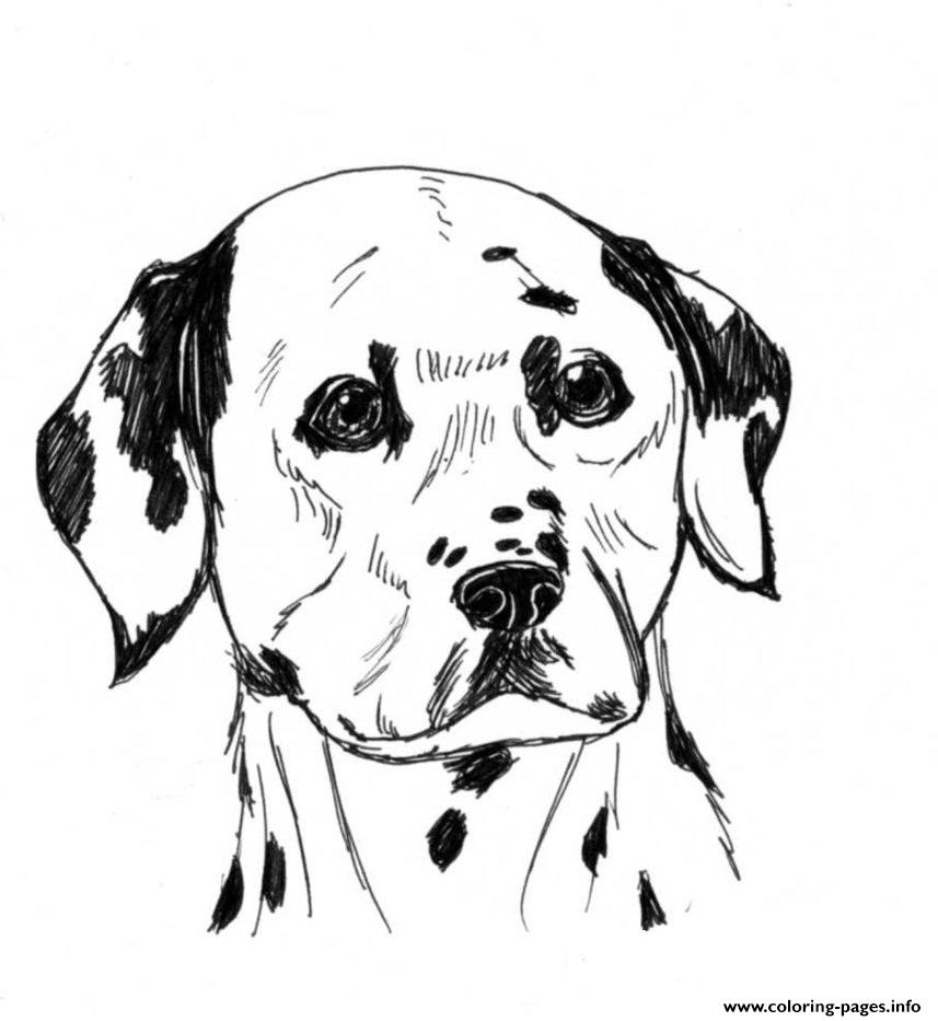 Dalmatian Dog B6cf Coloring Pages Printable