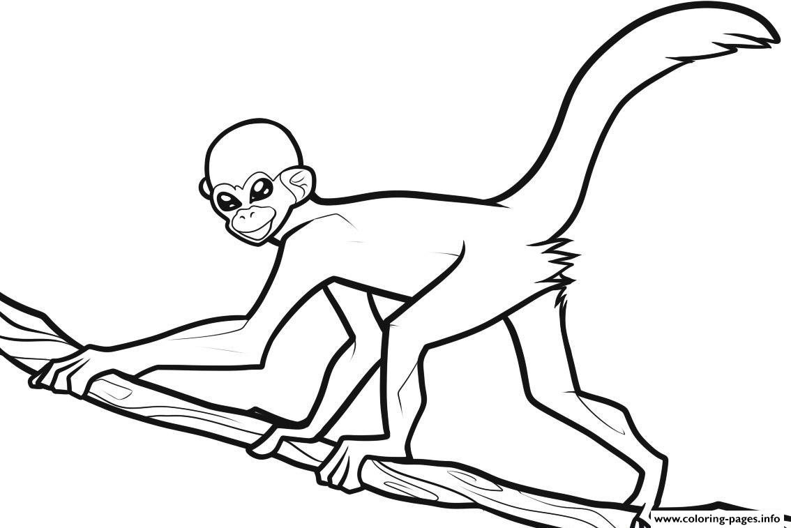 Monkey Printable Coloring Pages With Free Printable Monkey For Kids ...