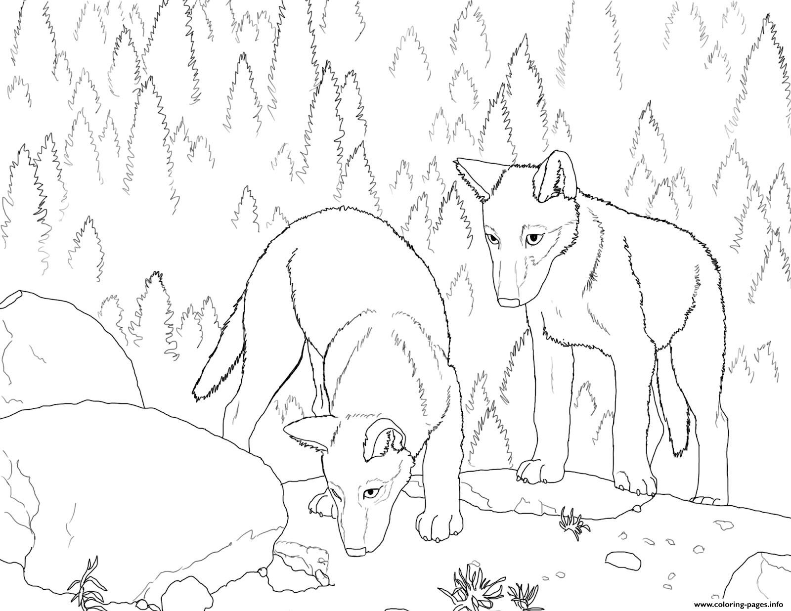 Wolf S Pup Coloring Pages Printable