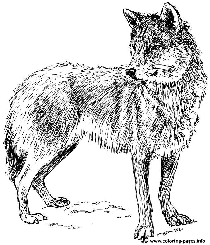 Adult Real Wolf coloring pages
