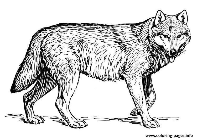 Wolf S To Print Out Coloring Pages Download
