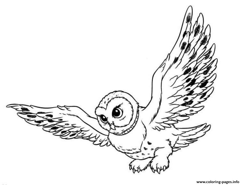 Snowy Owl S For Kids0cd5 coloring pages