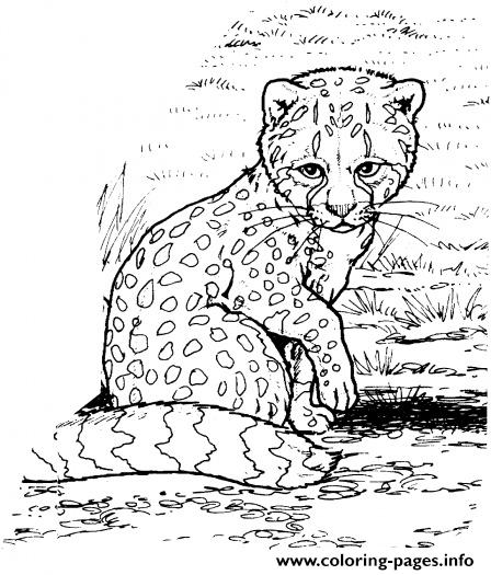 Baby Cheetah S For Kids9ec0 Coloring Pages Printable