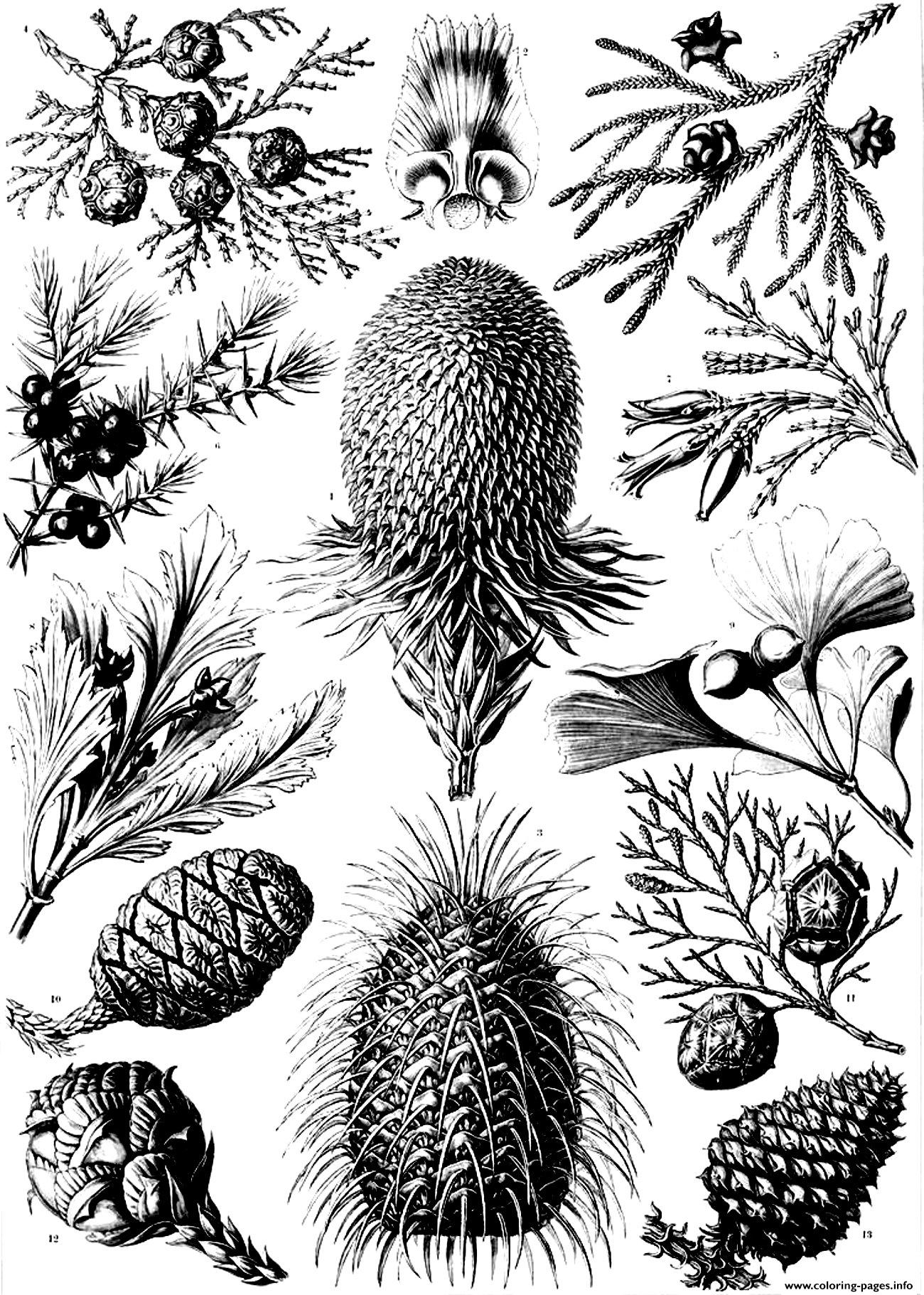 Adult Old Engraving Flowers Vegetation coloring pages