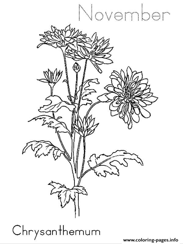Chrysanthemum november coloring pages