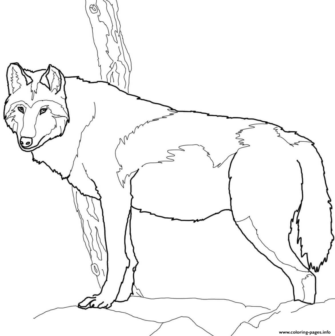 Wolf coloring pages printable - Wolf Coloring Pages Printable 52