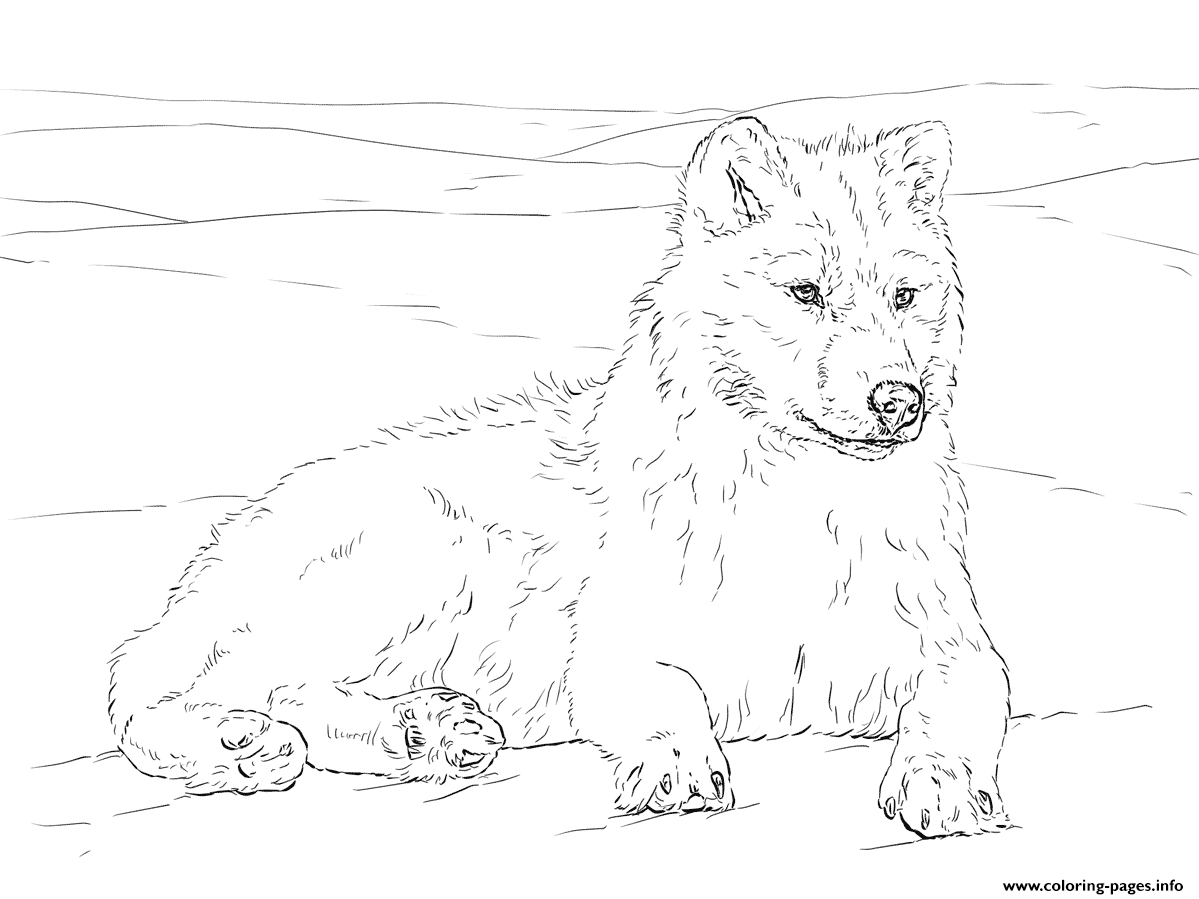 Arctic Wolf Coloring Pages Printable