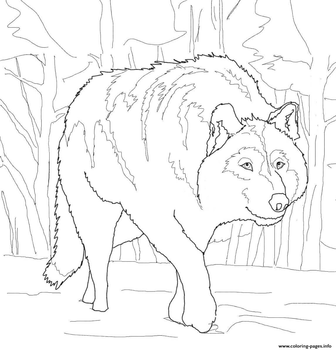 Crouching Gray Wolf Coloring Pages Printable