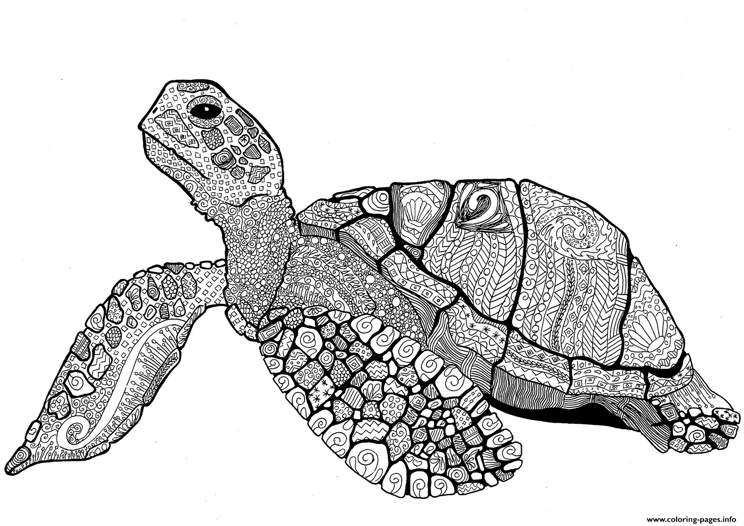 Zentangle Turtle Adults Coloring Pages Printable
