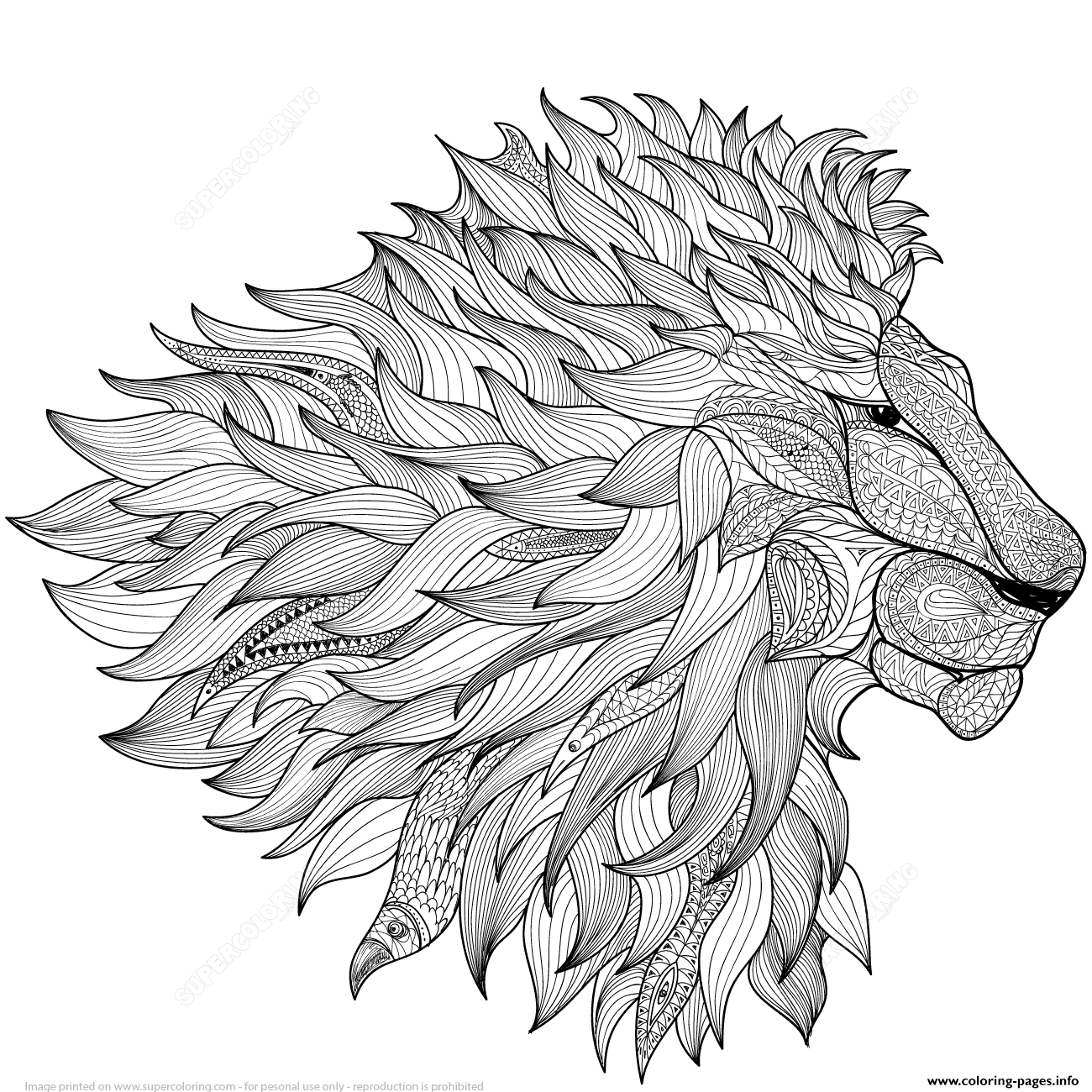Lion Zentangle Adults Coloring Pages Printable