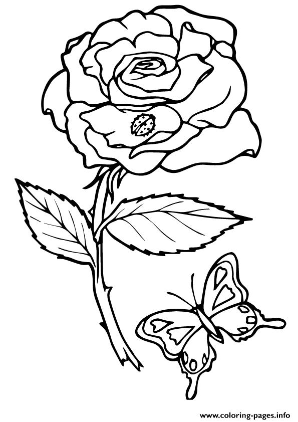 Rose Bug And Butterfly A4 coloring pages