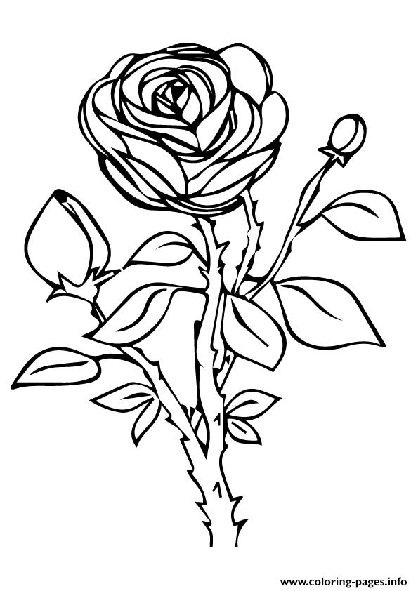 Rose Nature A4 coloring pages