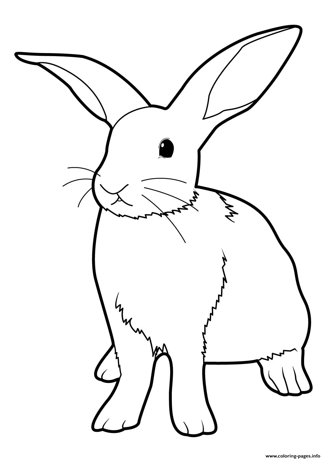 Easter Bunny Real Rabbit Coloring Pages Printable
