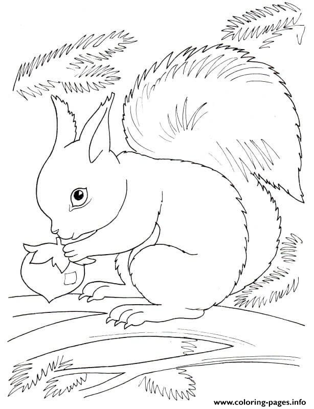 squirrel fall coloring pages printable