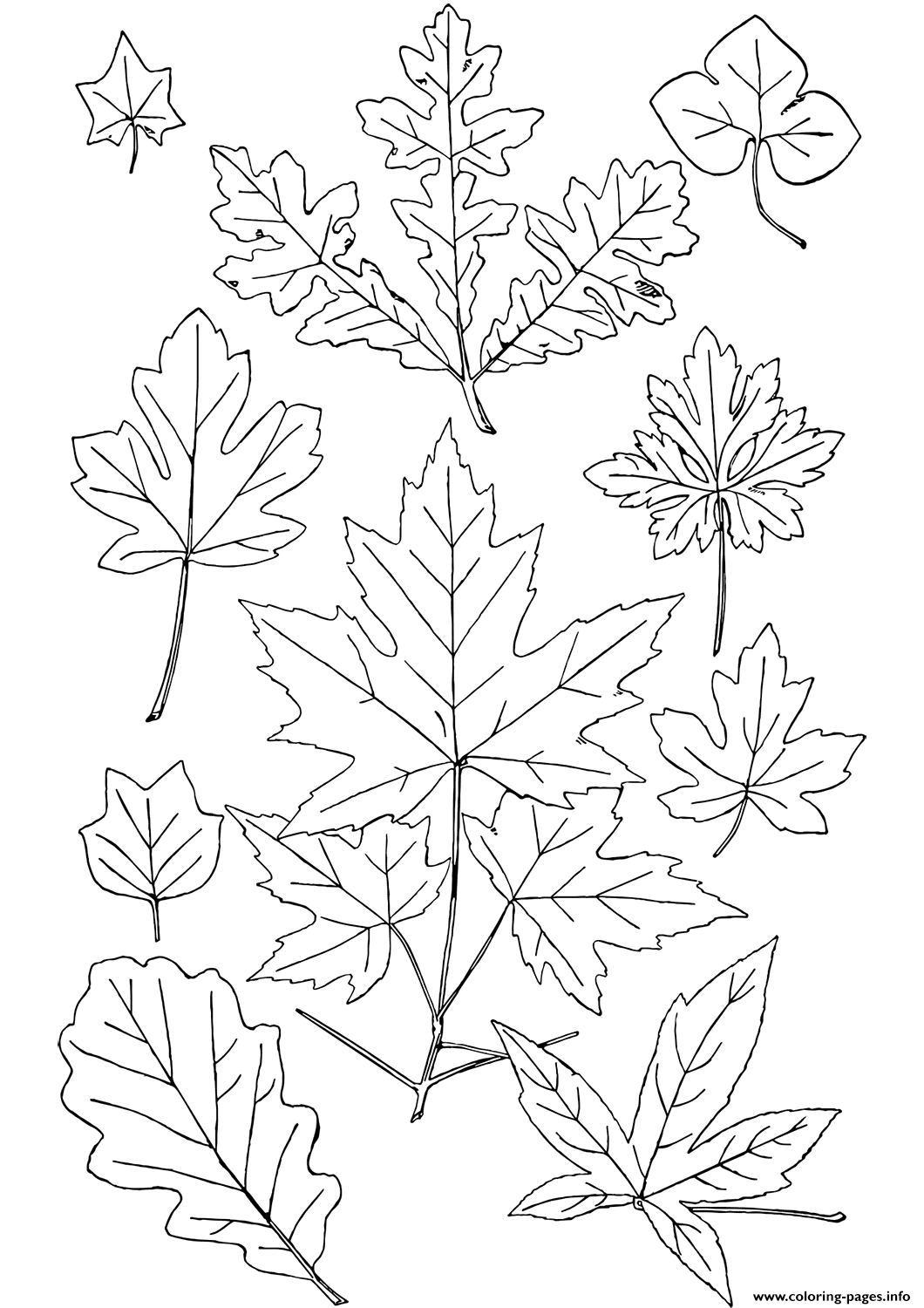 - Fall Leaves Coloring Pages Printable
