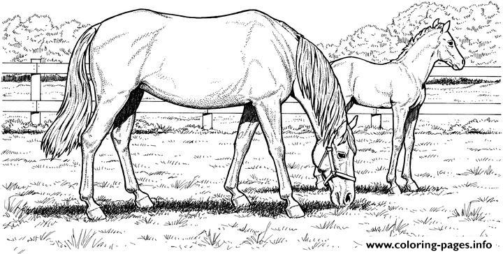 Mare And Filly In Field coloring pages