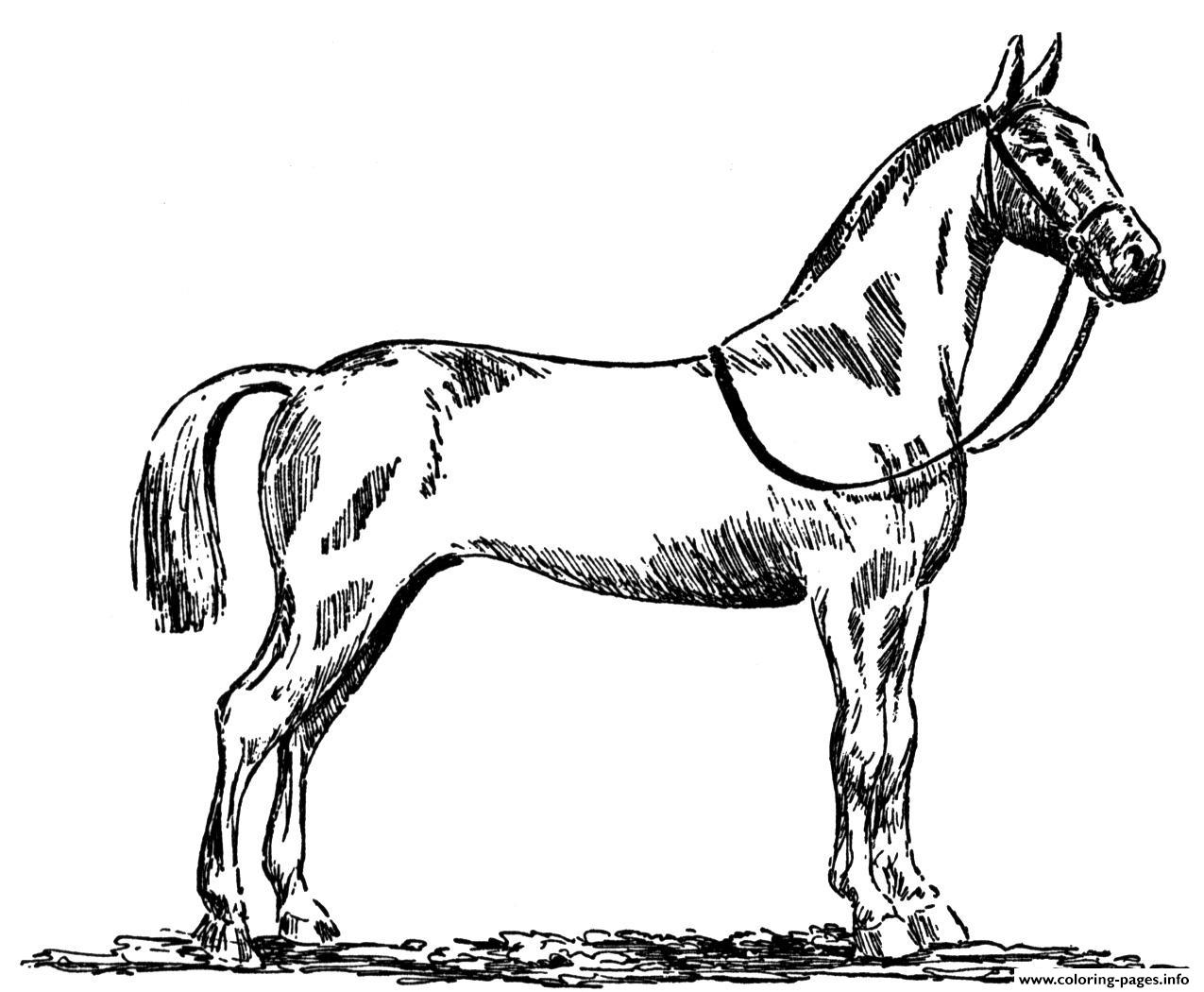Standardbred Horse coloring pages