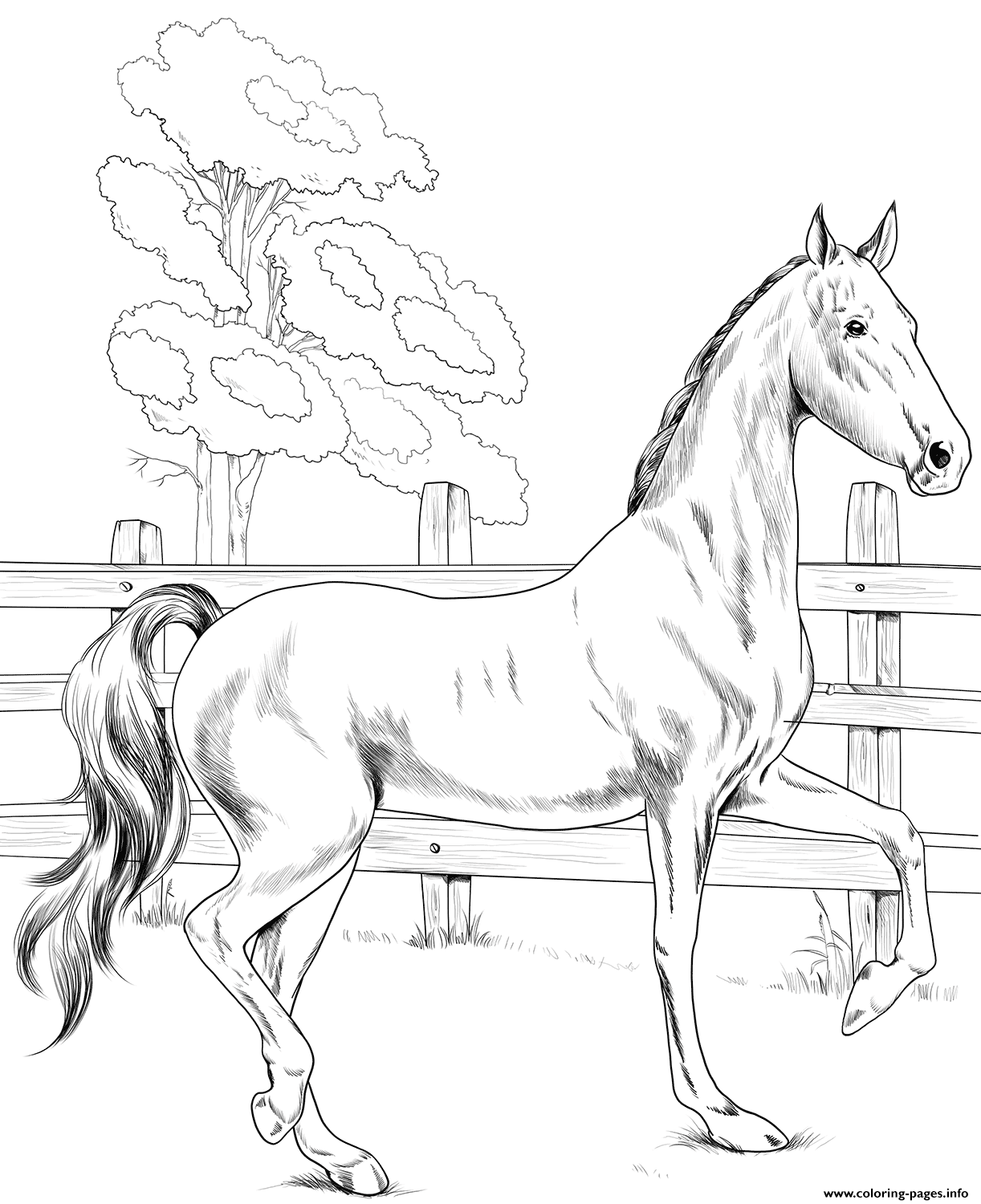 Horse American Saddlebred coloring pages