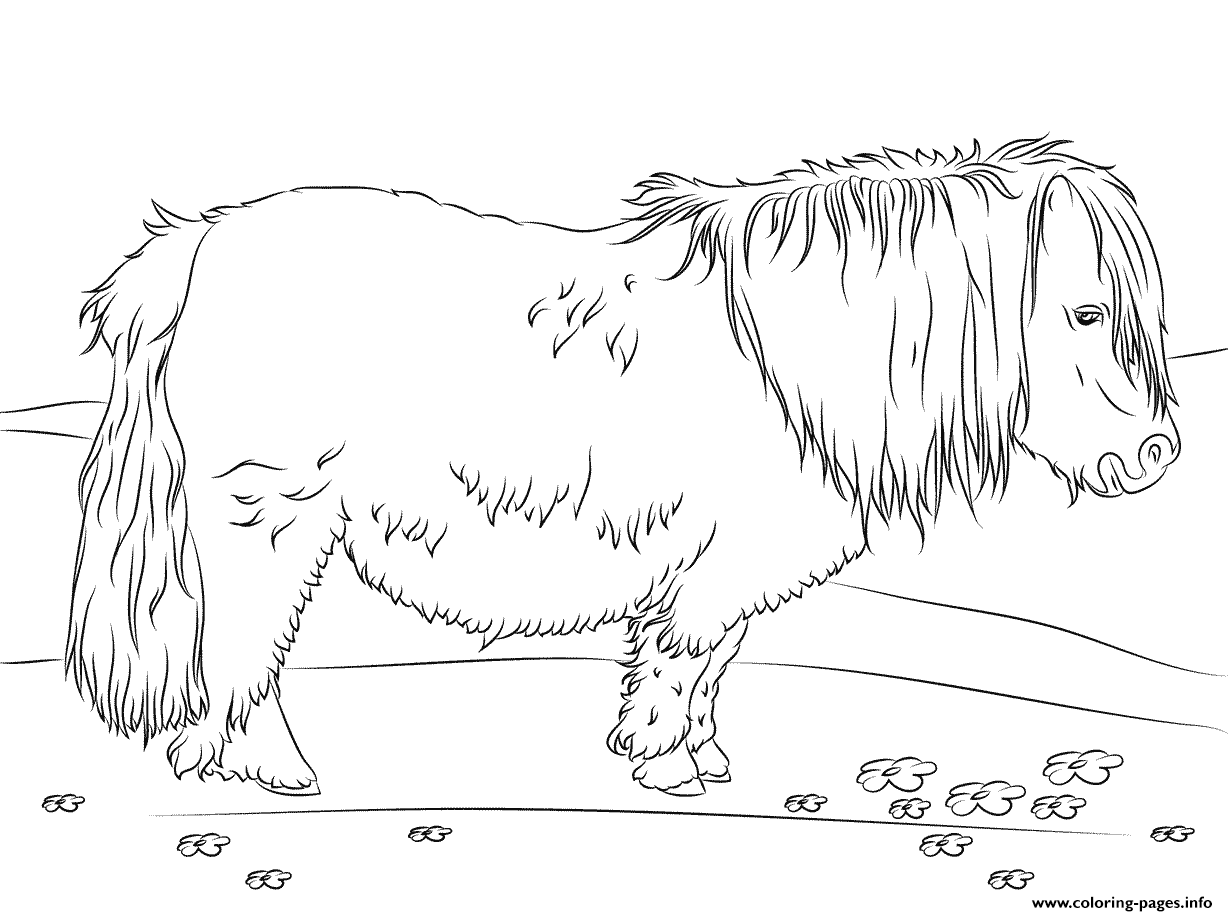 Cute Shetland Pony coloring pages
