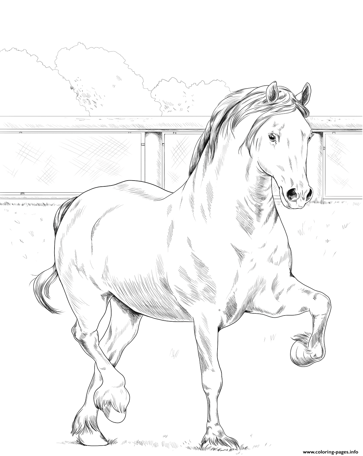 Horse Welsh Cob coloring pages