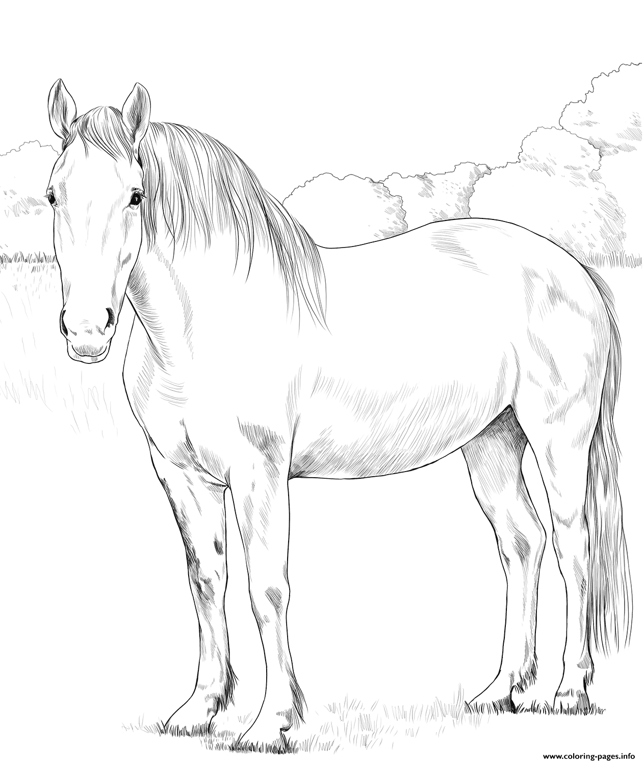 Horse Irish Draught Coloring Pages Printable