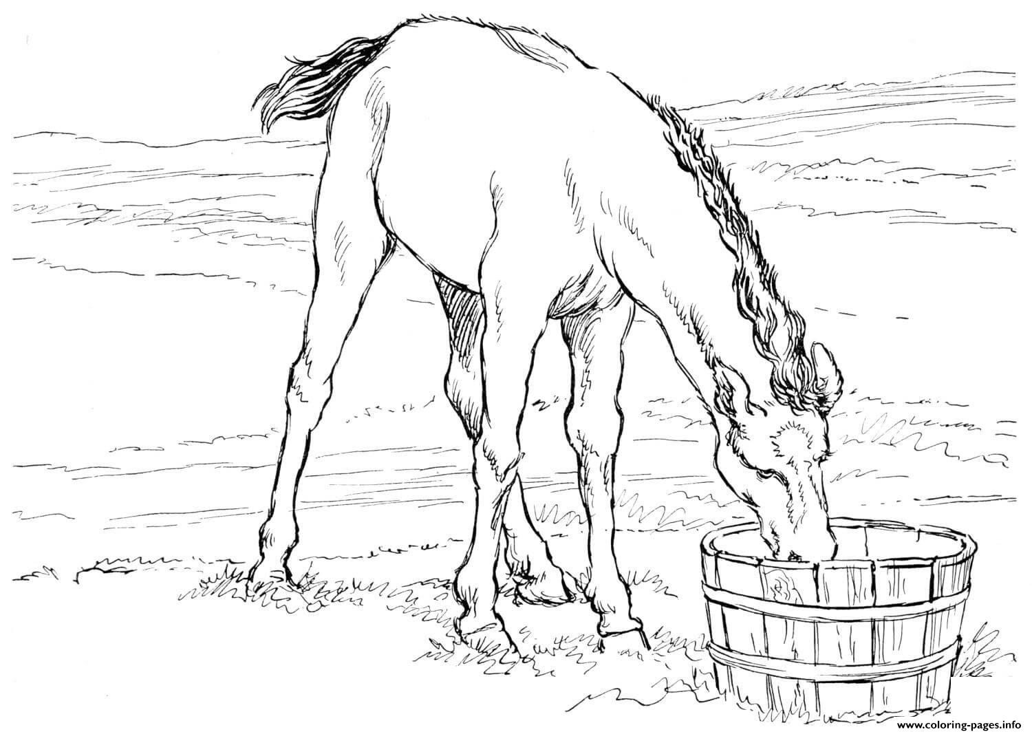 Horse Colt Drinks Water coloring pages