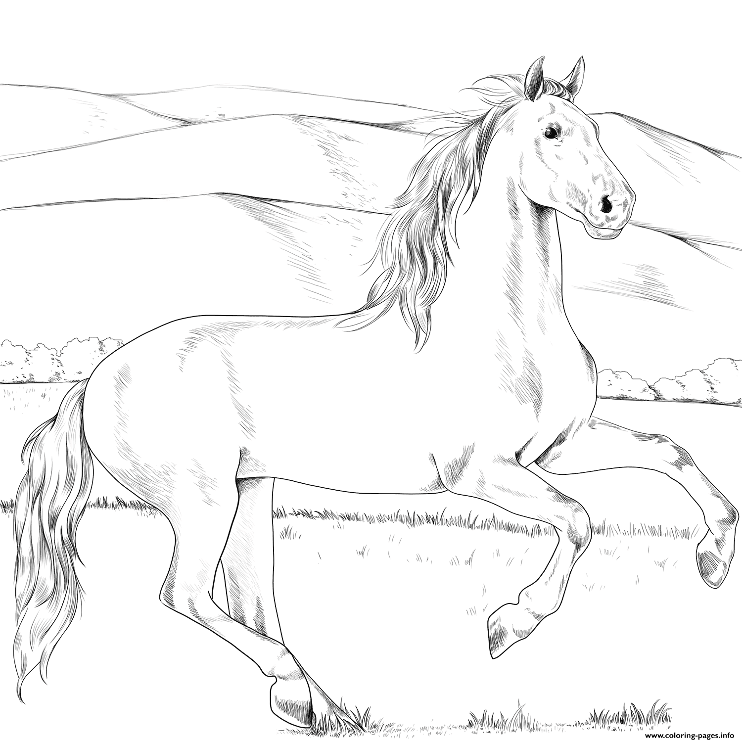 Andalusian Horse coloring pages