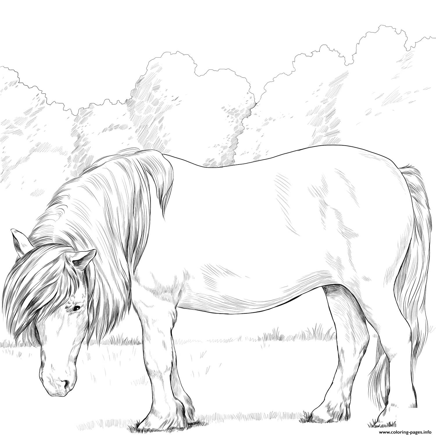 Horse Shetland Pony coloring pages
