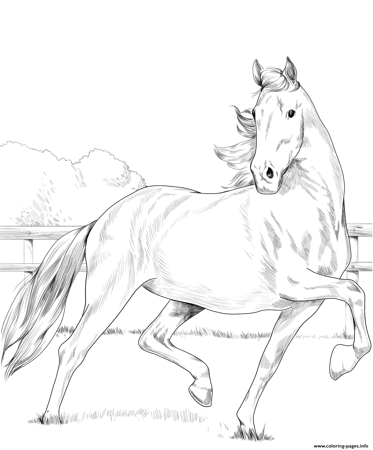 Hackney Horse coloring pages