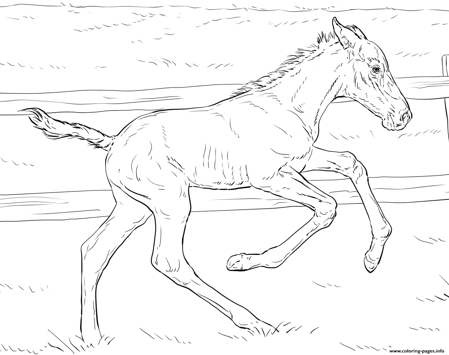 Horse Bucking Foal coloring pages