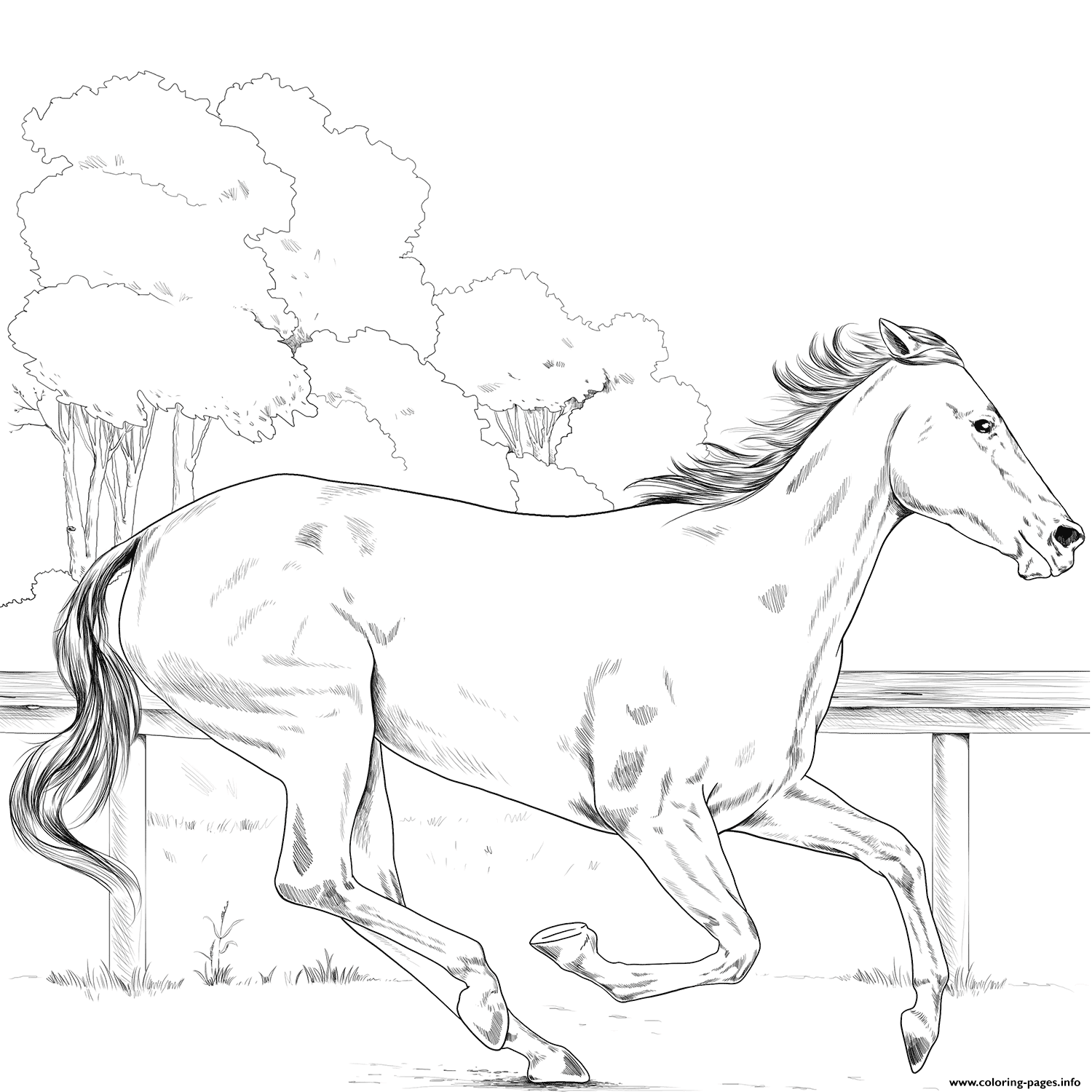 Horse Thoroughbred coloring pages