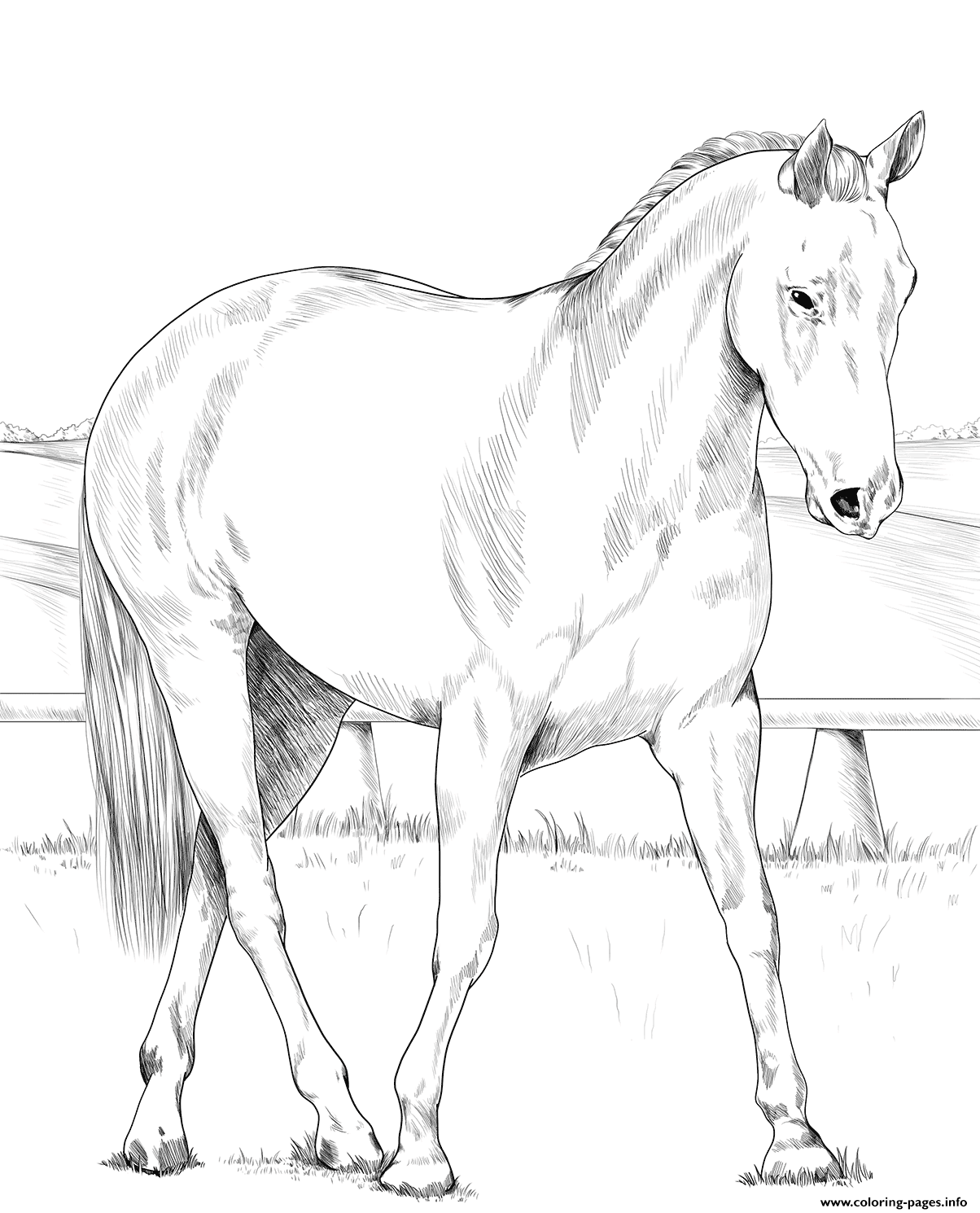 Australian Stock Horse coloring pages