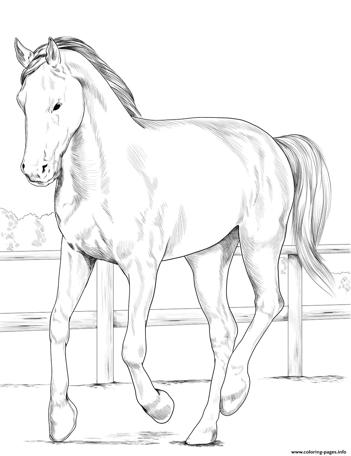 Horse Westphalian coloring pages