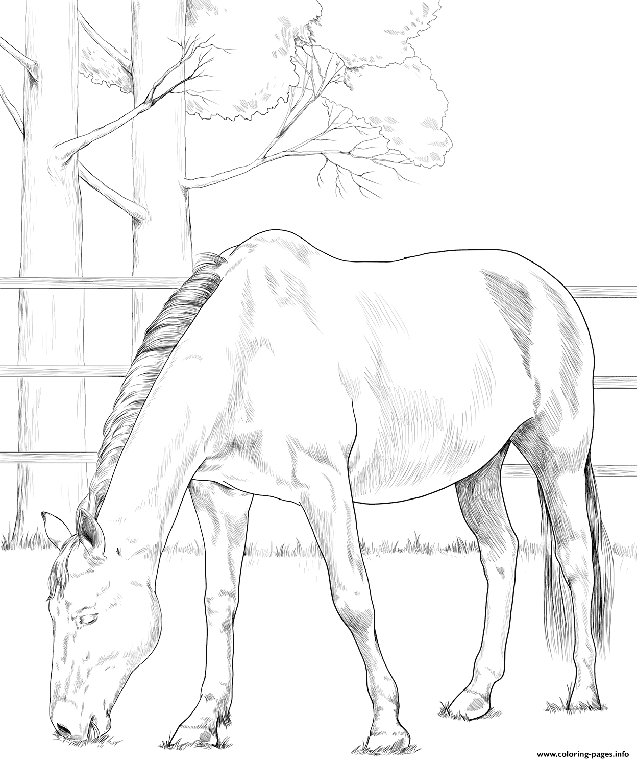Horse Danish Warmblood coloring pages