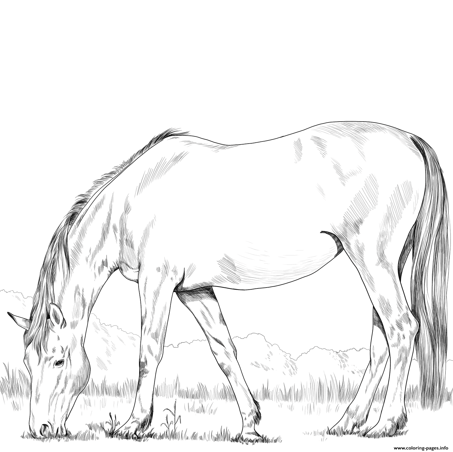 Hanoverian Horse coloring pages