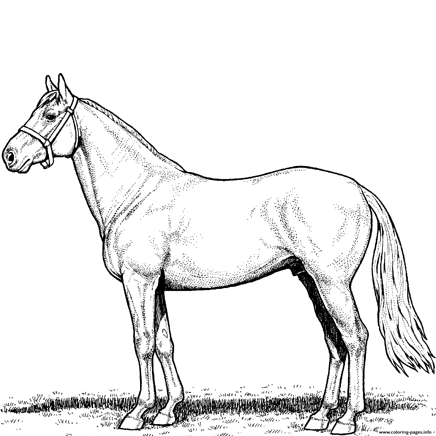 Horse Stallion Coloring Pages Printable