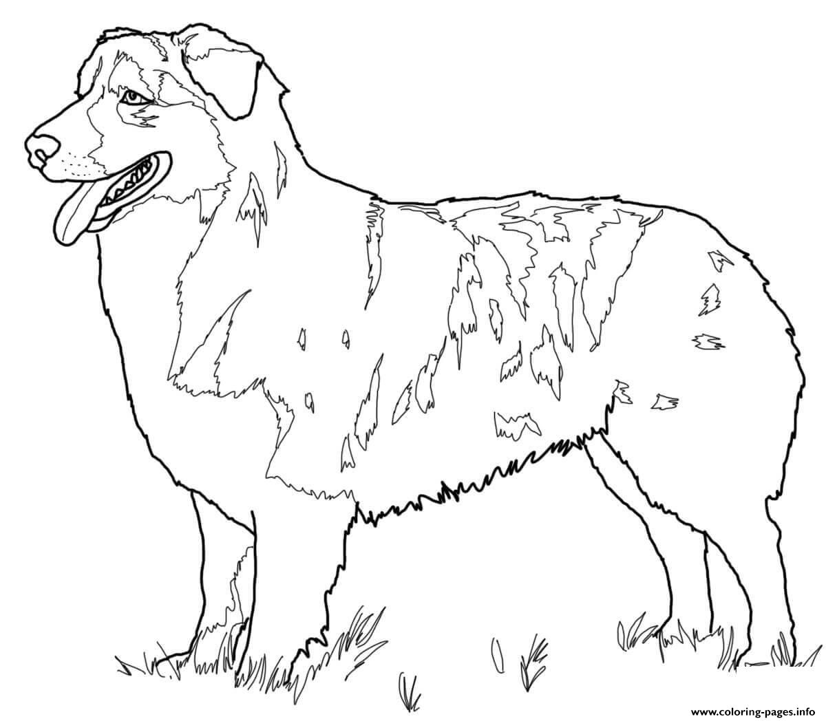 Australian Shepherd Dog Coloring Pages Printable