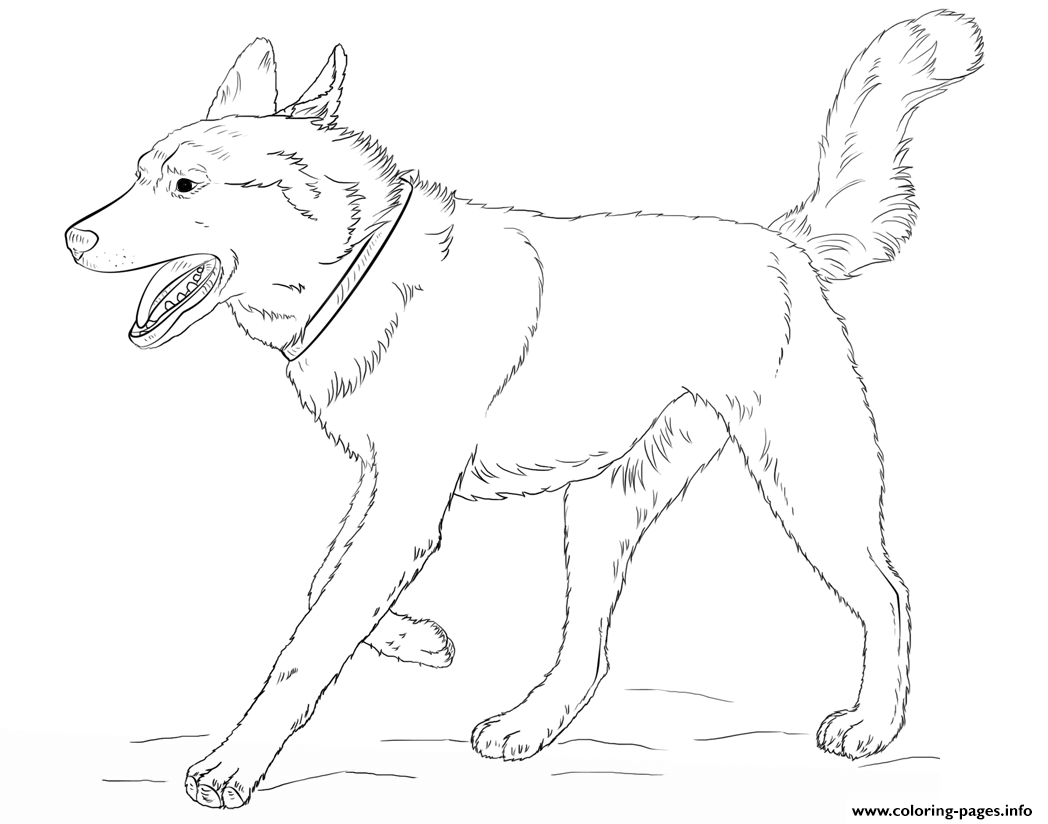 Top 25 Free Printable Dog Coloring Pages Online | Animais para ... | 824x1048